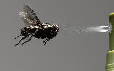 ¿ Cómo preparar un repelente natural efectivo para eliminar insectos ?
