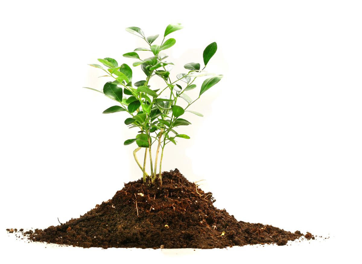 como elaborar tierra fertil