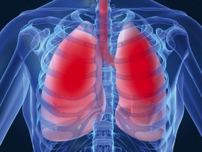 explicacion del funcionamiento de los pulmones