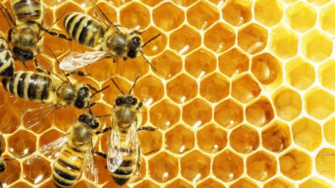 ¿Cómo son las abejas obreras?