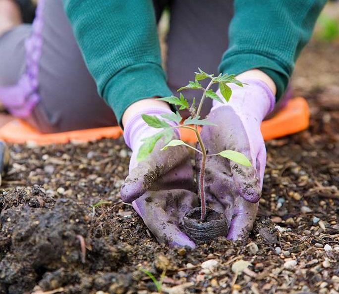 estudiar-curso-horticultura-cultivar