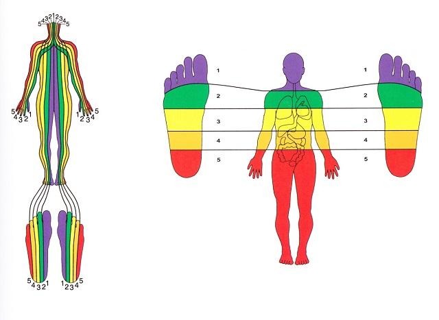 Esta técnica terapéutica se basa en la estimulación manual de los llamados puntos y zonas reflejas