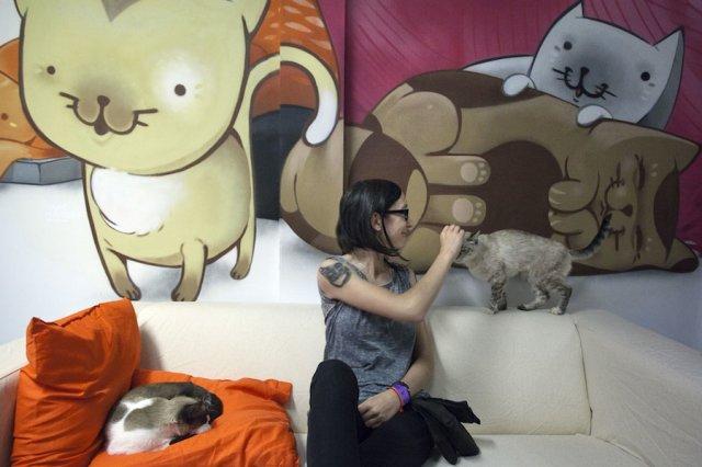 #5 Gatos de compañía