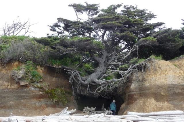 las plantas detectan los obstáculos que puedan impedir el crecimiento de sus raíces antes de que entren en contacto con ellos