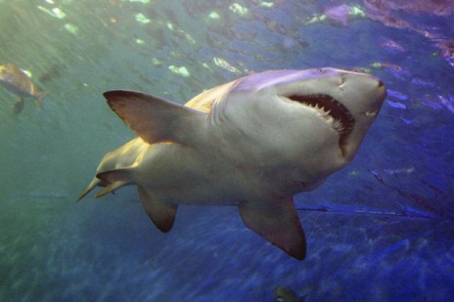 #6 Tiburones