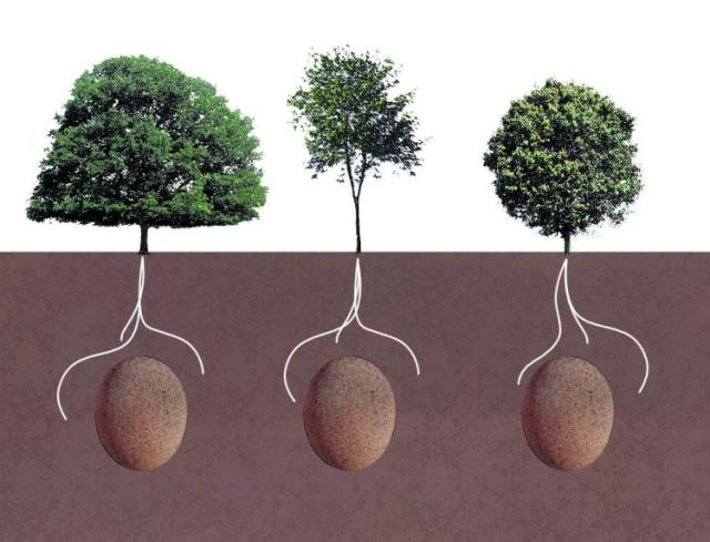 Capsula Mundi salva la vida de un árbol