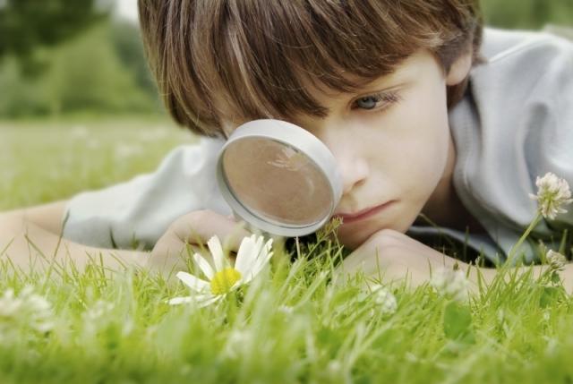 curiosidad hijos criar inteligencia