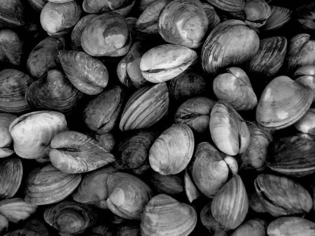 Paletas de almejas