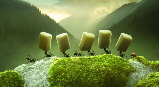 se relata la guerra entre dos especies de hormigas por unos terrones de azúcar