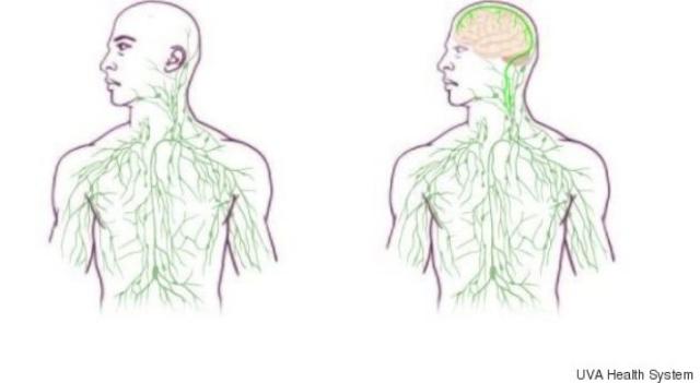 Un viejo mapa del sistema linfático (izquierda), y un nuevo mapa actualizado para reflejar el descubrimiento de los vasos linfáticos del cerebro (derecha).