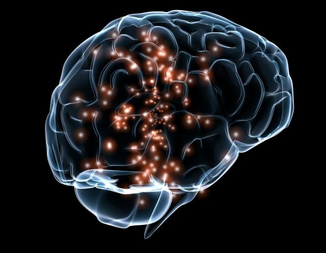 cerebro sistema inmunologico07