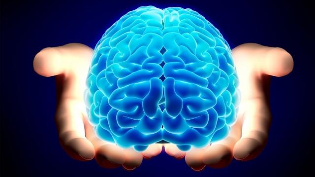 cientificos ecuentran una manera para cultirvar cerebros