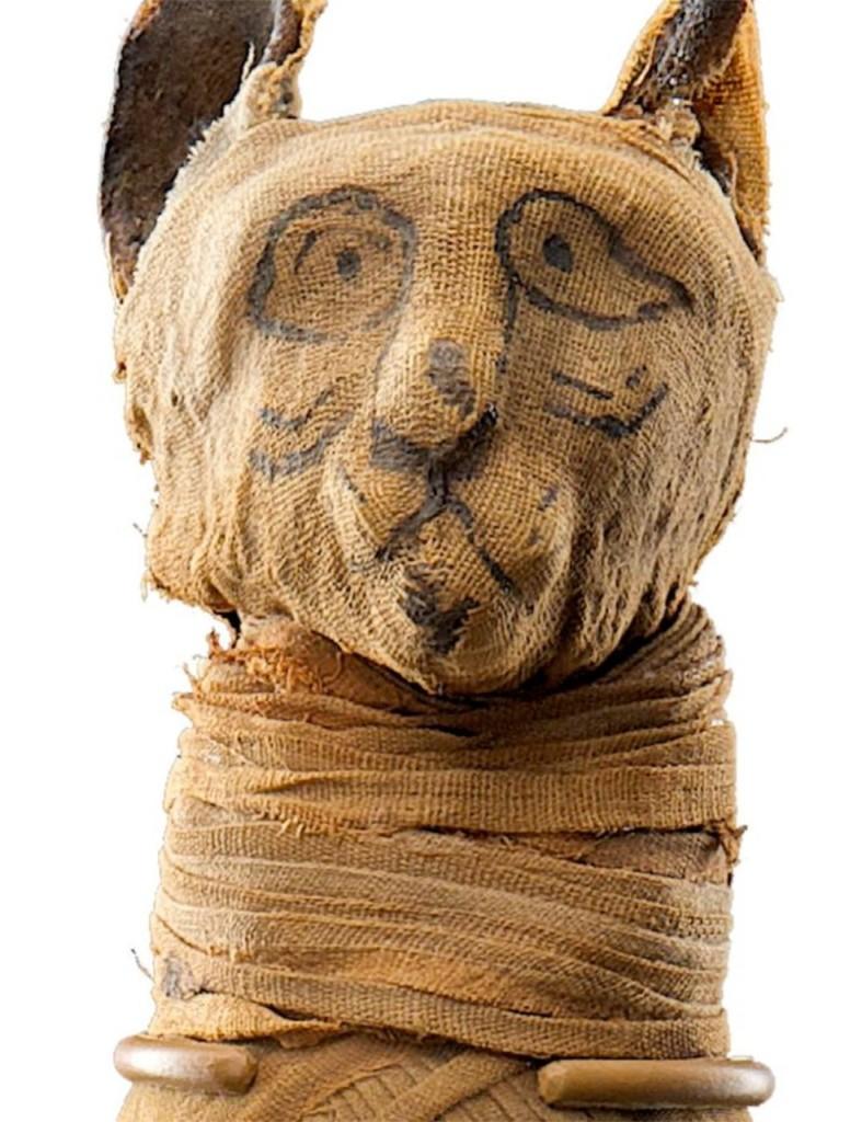 momificación animal
