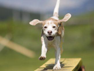 ganar confianza perro mascotas