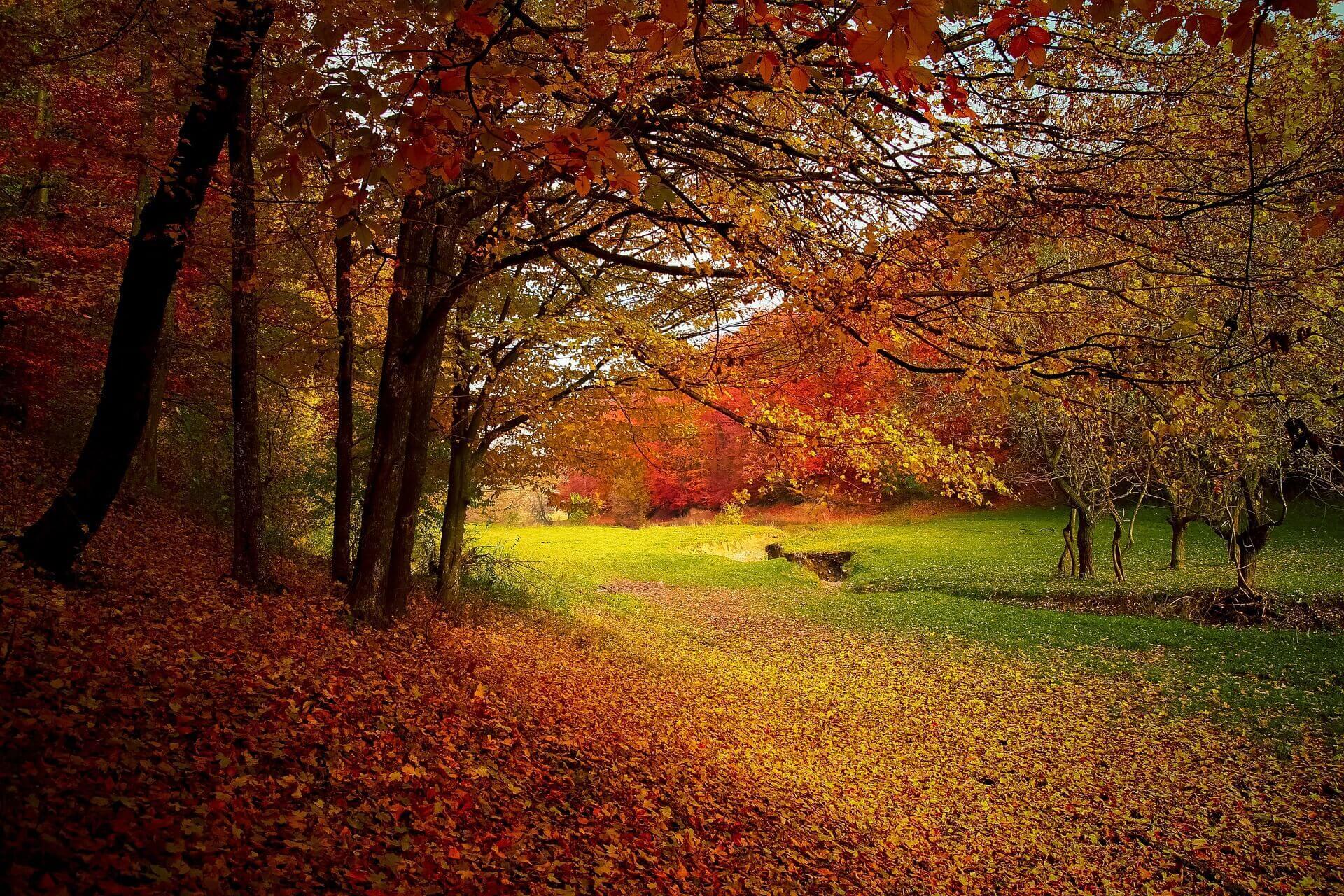 Consejos para ganarle a la depresión del otoño