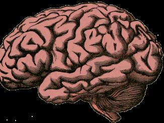 Qué es la Bioneuroemoción